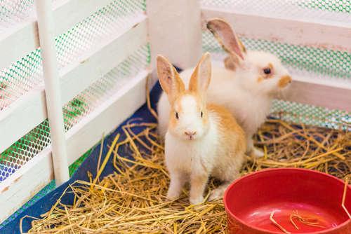 ウサギはお風呂に入れても大丈夫?