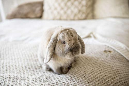 飼う前に知っておきたいウサギの特徴
