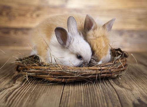 ウサギをお風呂に入れるのはどんな時?