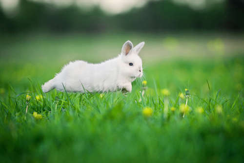 ウサギを選ぶ時の注意点