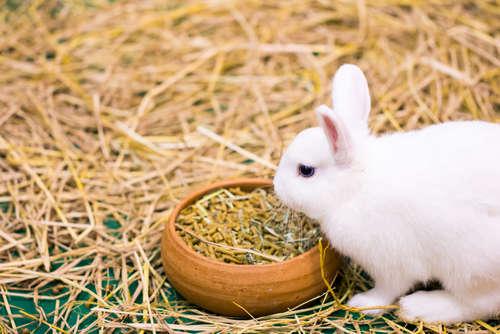 ウサギを迎えるまでに準備するもの