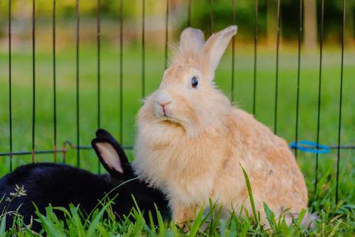 ウサギを家族に迎えたら