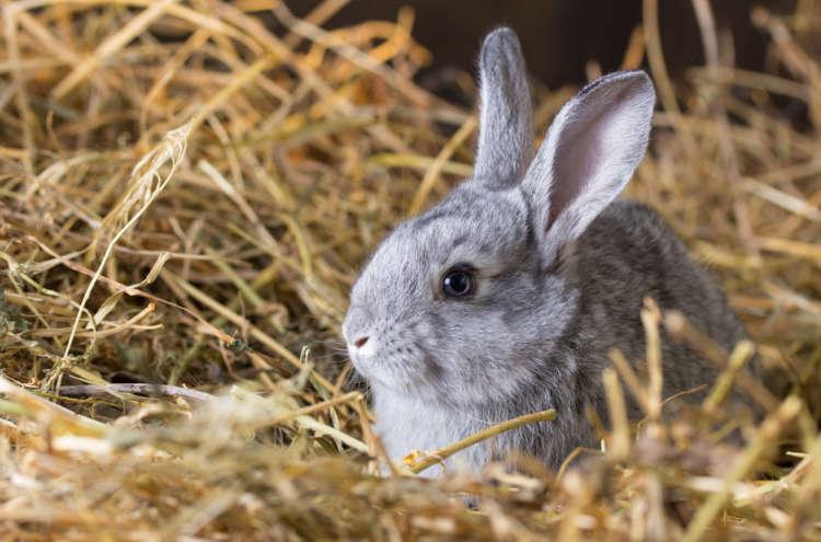 ウサギはお風呂に入れてもいいの? 正しいウサギの入浴方法について