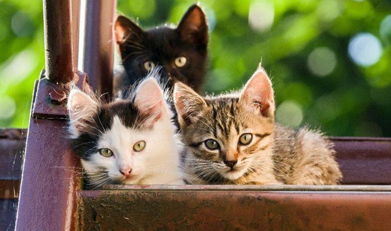 オシッコだけでも検査可能 獣医師が勧める猫の健康を守る方法